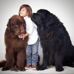 De twee honden hebben een bijzondere band met de kinderen en ze zijn waarschijnlijk de grootste en meest harige babysitters van de wereld.