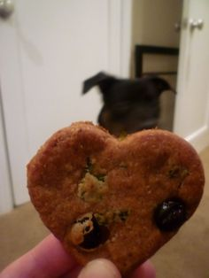 Peanut butter and banana dog biscuits recipe allrecipes homemade dog cookies forumfinder Gallery