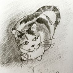 Calico cat pencil sketch.