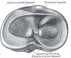 Meniscos rodilla