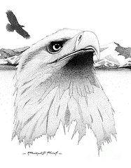 Ink Eagles Drawings - Reflecting  by Michael Kreizel