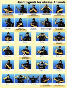 Scuba Hand Signals for Marine Animals