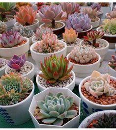 60 Ideas For Succulent Terrarium Cactus Succulent Gardening, Succulent Terrarium, Garden Plants, Indoor Plants, House Plants, Succulent Arrangements, Cacti And Succulents, Planting Succulents, Planting Flowers