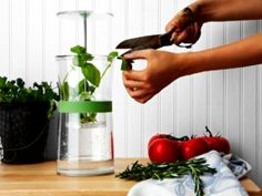 Recipe: White Bean Cilantro Dip. Great source of fiber, antioxidants, quercetin, & vitamins A, C, and K | Society Wellness