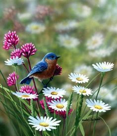Bluebird and Daisies by Bradley Jackson