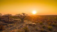 180 Grad Panoramasicht von der Höhe der Ghoha Hills aus, der Blick weit über die Savuti-Ebene im westlichen Teil des Chobe Nationalparks – das ist die optimale Ausgangslage für einen traumhaften Sonnenuntergang als Gast der Goha Hills Savuti Lodge in Botswana. Ein Tag mit Tierbeobachtungsfahrten klingt unter einem mächtigen Baobab, aus.Guide Paulus serviert das Wunschgetränk zum Sundowner, und alle Gäste halten inne, mit Blick auf die niedergehende Sonne – Afrika von seiner schönsten Seite!