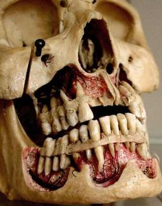 What are the exact classes in order to become a dentist?