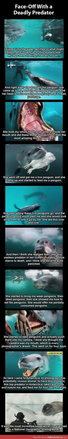 Photographer vs. deadly leopard seal