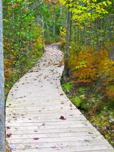 Beaver Lake Nature Center  Baldwinsville, NY. If you are looking for a place to clear your head, take a walk on one of these trails.