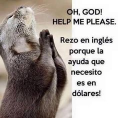 Oh...God Spanish Humor, Spanish Quotes, Mexican Humor, Mexican Funny, Frases Humor, Funny Bunnies, E Cards, Animals And Pets, Laughter