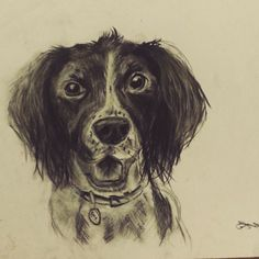 The Spring in the Spaniel  #charcoal #drawing #art #dog