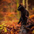 Love black #Cats in #autumn @catwisdom101