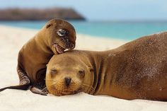 Sea Lions, Espanola Island, Galapagos Islands