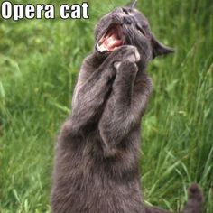 Opera cat... Only sings soprano.