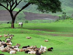 Lonavala near Pune / India