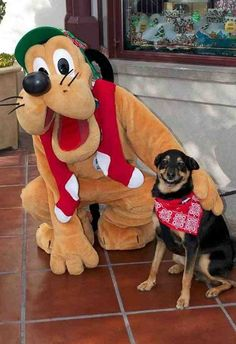 This dog looks stoked to be getting his photo taken with Pluto!