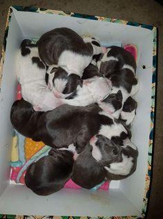 cuteness overload!!!😍