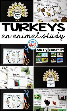 Engage your class in an exciting hands-on experience learning all about turkeys! This Turkeys: An Animal Study is perfect for science in Preschool, Pre-K, Kindergarten, First Grade, and Second Grade classrooms and packed full of inviting science activities.  Students will learn about the difference between turkeys and chickens, animals that can and cannot fly, parts of a turkey, and a turkey's life cycle.