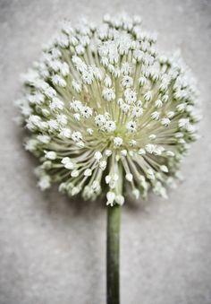 39 best Artelux / Wat voor een soort gordijnen? images on Pinterest ...