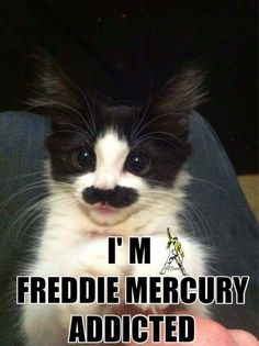 Read from the story Queen pictures by Box_of_tomatos_fairy (Hey vIKTOR) with reads. Cute Cats, Funny Cats, Funny Animals, Cute Animals, Freddie Mercury Quotes, Queen Freddie Mercury, Freedy Mercury, Queen Band, Queen Queen