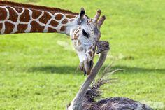 busch garden animal photos - Google Search