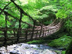 Me Bashi (女橋) in the Inner Iya Valley (奥祖谷), Tokushima Prefecture