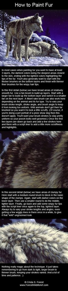 How to paint wolf fur.
