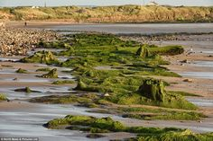 Ancient footprints as well as prehistoric tree stumps and logs have become visible along a 200-meter stretch of a coastline at Low Hauxley near Amble, Northumberland, in what is believed to be Doggerland, the Atlantis of Britain.