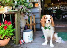 キュートな犬の店長がお出迎え♪森の中に建つ一軒家のくつろぎカフェの画像 ことりっぷ | antenna