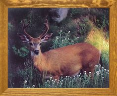 Deck up your interiors with this whitetail deer wild animal room décor art print poster. It will add a wildlife charm at your place. You'll be proud to hang this poster on your wall. Its wooden brownrust frame accentuates the poster mild tone. The frame is made from solid wood measuring 19x23 inches with a smooth gesso finish. It includes a saw tooth hanger on the back for easy display. Hurry up and grab this wonderful wall poster for its durable quality and high degree of color accuracy.