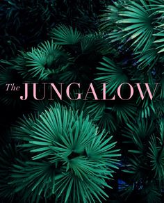 Welcome to the Jungalow!