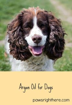 Using argan oil for dogs. This Moroccan nut oil also works for our canine friends.