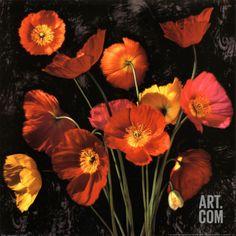 Poppy Bouquet II Print by John Seba at Art.com