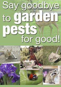Take back your yard this spring with the great tips and tricks supplied by our own amazing Hometalk members! They have great advice for getting rid of common backyard and garden pests.