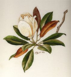 Magnolia by Trish Burr peinture à l'aiguille