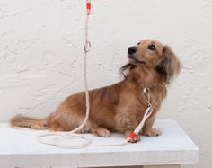 Nautical dog leash cotton rope coral & tangerine