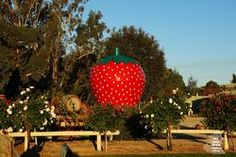 The Big Strawberry - Koonoomoo Vic. Awesome place for breakfast, ice cream - my favourite is their pancakes! Wildlife Tourism, Pancakes, Strawberry, Ice Cream, Tours, Australia, Big, Breakfast, Awesome