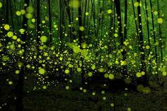 таинственный лес Нагоя, Япония