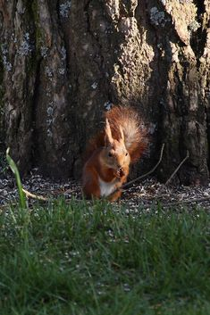 Photography, Animals, Photograph, Animales, Animaux, Fotografie, Photo Shoot, Animal Memes, Fotografia
