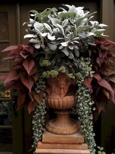 Fresh Ideas for Fall Containers Fall Formal While fall is so much about the rustic look of harvest, there's room for an elegant take on these season, too. Adding a fall blooming sedum to this planting of dusty miller, Silver Falls dichondra, and potato vi Silver Falls Dichondra, Landscape Design, Garden Design, Plantas Indoor, Fall Containers, Succulent Containers, Fall Container Gardening, Succulents, Garden Urns
