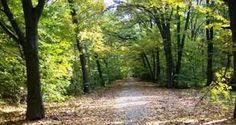 Imagini pentru domeniul cantacuzino floresti Country Roads, Plants, Planters, Plant, Planting