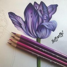 Made a start on my new drawing of another Iris this week🌼🌺🌸 Colored Pencil Tutorial, Colored Pencil Techniques, Coloring Book Art, Colouring Pages, Coloring Tips, Caran D'ache, Mandala Drawing, Drawing Art, Drawing Ideas
