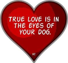 true love is in the eyes of your dog !!
