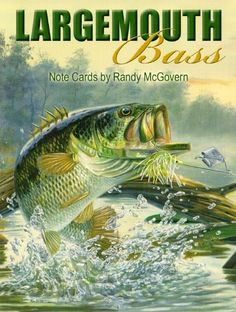 Leanin Tree Fish Note Cards | Largemouth Bass