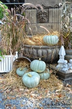 Tiffany Blue pumpkins :)    ♕ Old Lucketts Store - Blue Jarradale pumpkins