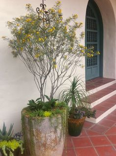 ideal for next to front door terrace and with the tall yellow flowering plant growing next to the road Spanish Bungalow, Spanish Style Homes, Spanish Revival, Spanish House, Spanish Colonial Decor, Spanish Home Decor, Tuscan Style Homes, Ranch Style Homes, Spanish Garden