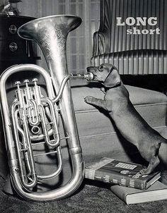 Doxie tuba