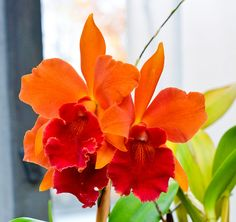 Intergeneric Orchid Hybrids | Recent Photos The Commons Getty Collection Galleries World Map App ...