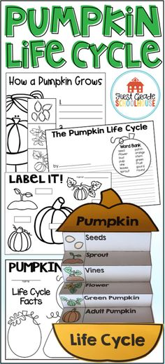 Fall activity for kids. Students learn about the growth of a pumpkin from pumpkin seed to adult pumpkin. The life cycle packet includes posters, booklets, vocabulary cards, and printables. Students sequence, compare and contrast, label, match vocabulary words to pictures, and write about the life cycle of a pumpkin. Science For Toddlers, Autumn Activities For Kids, Interactive Learning, Student Learning, Pumpkin Life Cycle, Kindergarten Homeschool Curriculum, First Grade, Second Grade, Science Videos