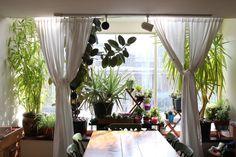 House Plant Tour: Elspeth & Blake — House Plant Journal